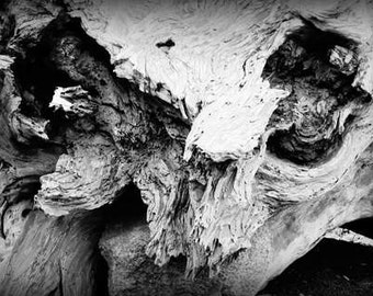 Dark & Twisty - Skull (black and white nature photography print, creepy spooky snarly dead tree trunk wood texture wall art home decor)