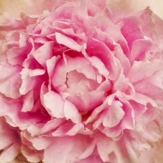 Awesome Peony  Archival Print