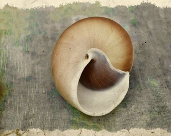 Still Life Photography, Beach Decor, Sea Shell Print, Coastal Wall Art