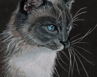 Colored Pencil Siamese Cat Drawing