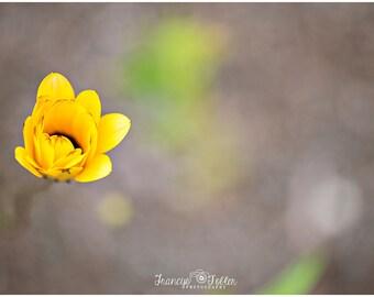 Spring Yellow Blossom Flower Fine Art Canvas wrap- macro 2
