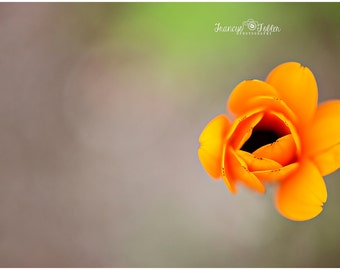 Spring Orange Blossom Flower Fine Art Canvas wrap- macro