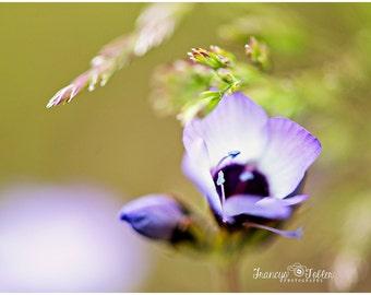 Spring Purple and White Flower Fine Art Canvas wrap- wild flower