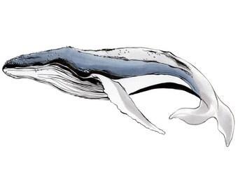 Humpback Whale 11x14 Print