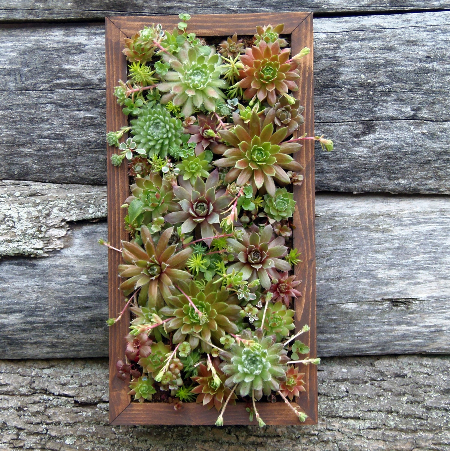 Succulent Wall Art Ready To Hang. French For Living Room. Living Room Bench Storage. Brown And Tan Living Room. Assisted Living Dining Room. Small Space Living Room Design Pictures. Cozy Living Rooms Ideas. Georgian Living Room. Egyptian Living Room Decorating Ideas