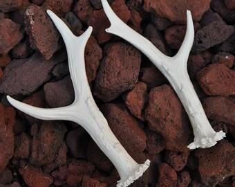 Pair of Hand Made Replica Roe Deer Antlers