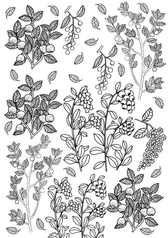 Berries And Leaves Coloring Sheet Printable Instant