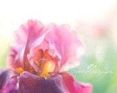Iris | Fine Art Photography