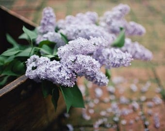 """Lilac Photograph - Floral Photography - lavender brown green -  Country Home Decor  - Cottage Chic - Fine Art Photograph - """"Lilacs"""""""