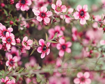 Flower photography Spring Photography Nature photography pink green  blooming bush wall art Spring Decor   Fine Art Photography Print
