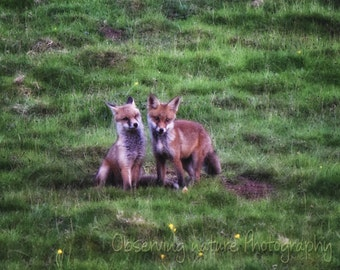 Fox Cubs Fine Art Photography Download