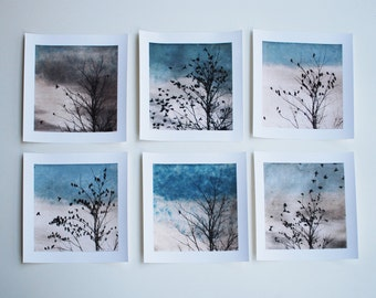 set of 6 prints, bird art, Archival reproduction, Doves, 88 editions art
