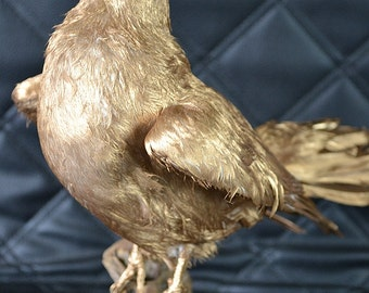taxidermy of evil pigeon,gold shine dove