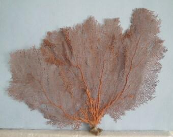 "Pacifigorgia Red  Color  Large Sea Fan 21"" x 14"" Seashells Reef Coral"