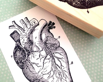 Anatomical Heart  Wood Mounted Rubber Stamp  5016