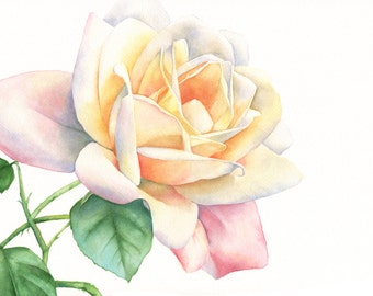 Rose print of watercolour painting 5 by 7 size small print R4415