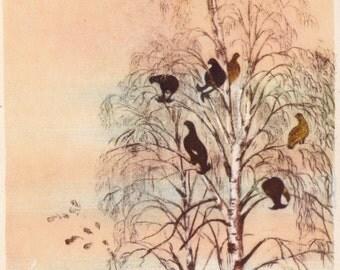 Vintage Kurdov (Grouse in birch trees) Postcard - 1958