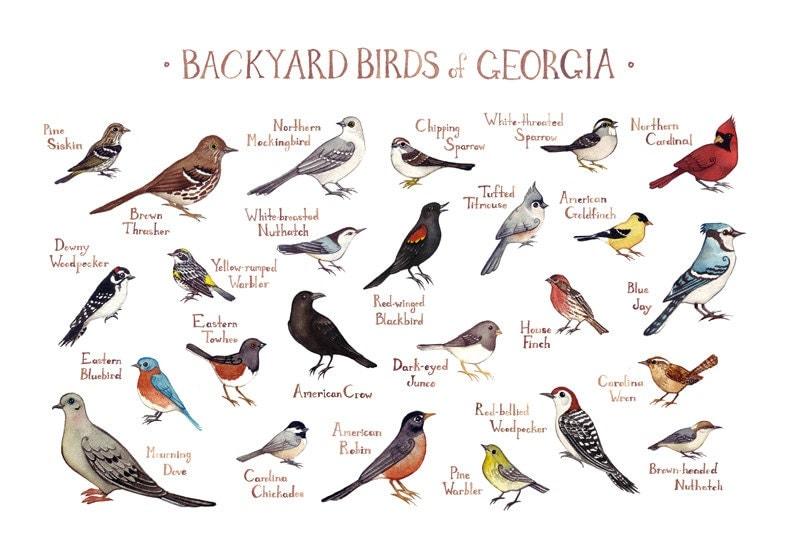 georgia backyard birds field guide art print watercolor