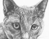 "Custom Cat portrait, personalized sketch drawing from photo 6""x8"", Pet portrait commission, custom pet drawing"