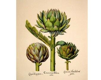 """small ARTICHOKES PRINT - green globe artichoke vegetable print - Jerusalem artichoke - carcofi - 7.5 x  8.125"""""""