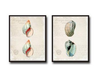 Seashell Collage Print Set No. 2, Antique Seashell Print Set, Giclee, Art, Collage, Coastal Art, Illustration, Seashell Prints, Wall Art