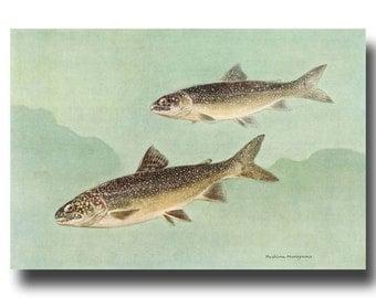 "Trout Print, Lake Wall Art (Vintage Fishing Gifts, 1930s Fish Illustration) --- ""Lake Trout"" No. 118"