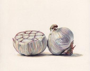 Softneck Garlic. Original egg tempera illustration from 'The Taste of America' book.