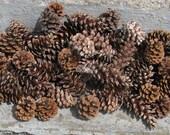 natural pinecones lot of 90 white pine ponderosa woodlands wedding rustic wedding floral craft supplies