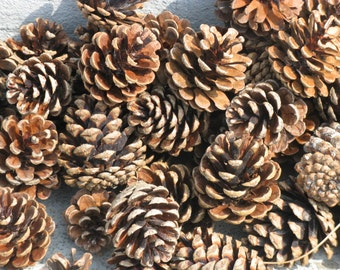 55 ponderosa pine cones smaller sizes christmas crafts fall crafts natural woodland wedding