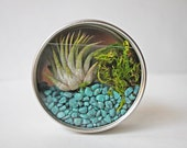 Miniature Air Plant Moss Terrarium in Magnet