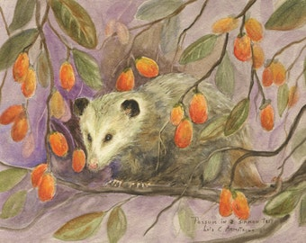 "Opossum Print - ""Possum in a 'Simmon Tree"" 5 x 7 inches. Reproduced from an original watercolor painting"