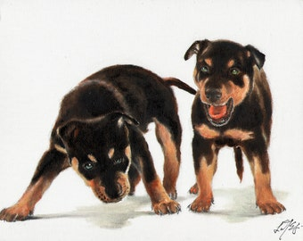 New Original Oil DOG Portrait Painting AUSTRALIAN KELPIE Art Puppy Artist Signed Artwork