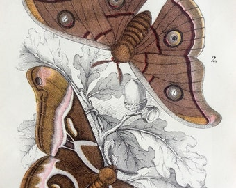 Original Antique MOTH 1897 Victorian Bookplate MOTHS Chromolithograph Lepidoptera Caterpillar Print Circa 1800s  Home Decor Vintage Print