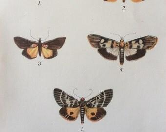 Original Antique MOTH 1897 Victorian Bookplate MOTHS Chromolithograph Lepidoptera Print Circa 1800s Home Decor Vintage Print
