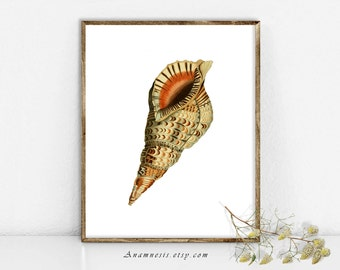 TRITON SEA SHELL - Instant Download - printable antique ocean illustration retooled by Anamnesis for framing, totes, scrapbooking etc.