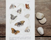 Vintage 1945 Butterfly Print, Wall Art, Rustic Home Decor, Caterpiller, Insect Book Plate V