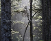 Mist Sunlight Green Grey Forest Trees, Pacific Northwest, Morning Light Nature, Fine Art Photography signed matted 8x12 Original Photograph