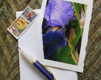 Blue Iris Photo Note Card Blank with Deckle Edge - #IRIS001
