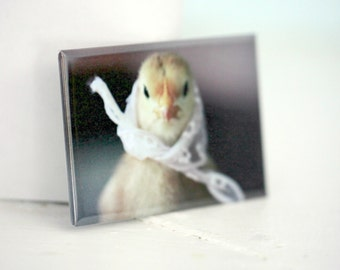 Chicks in Hats Chicken in A White Lace Kerchief Rigid Rectangle Magnet