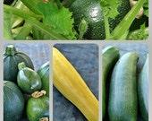 Zucchini Squash  Collection Heirloom Seeds Non GMO