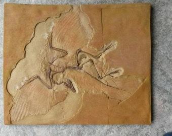 Archaeopteryx cast