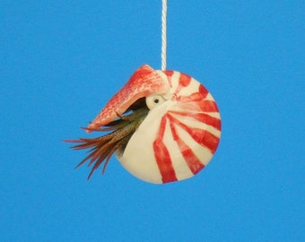 Mini Nautilus,  Hanging Air Planter, Whimsical gift,  Live Ornament, Necklace