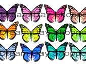 Colorful Monarch Butterflies - Digital Download