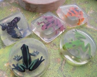 Frog soap favors  Amphibians soap / party favors