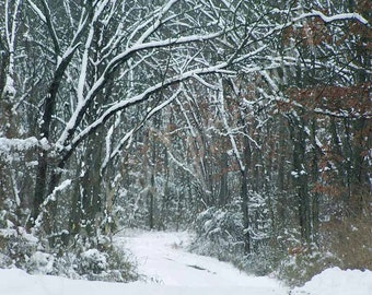 PHOTO Greeting Card - SNOW-Tranquil Beauty1 - Photo Print