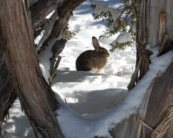 Rabbit In Snow,Bunny Rabbit,Animal,Rabbit,Bunny,Wildlife,Nature,Print,Photography,Canvas Art