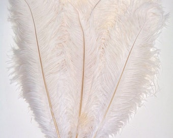 White Ostrich Feathers 17-21 inch per Dozen Lamplight Feather