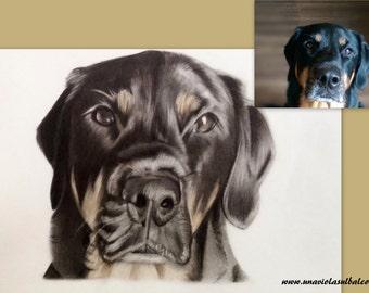Custom drawing/ pet portrait/ from photo/animal drawing/ photo to drawing/ realistic drawing/ colors/ memorial pet/ gift idea