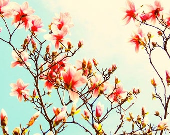 Magnolia Photograph - Spring Flower - Magnolia Tree - Wall Decor - Pink Magnolia - Nature Art - New York Magnolia - Magnolia Photography
