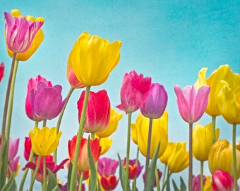 Multi-colored tulips with Teal, Red, Yellow and Purple